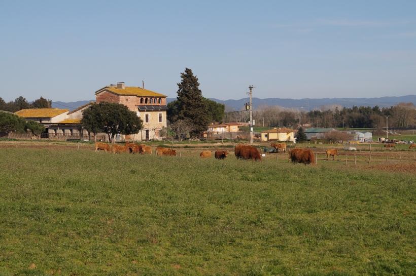 vacas-a-lo-lejos